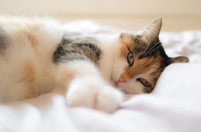 cat stats