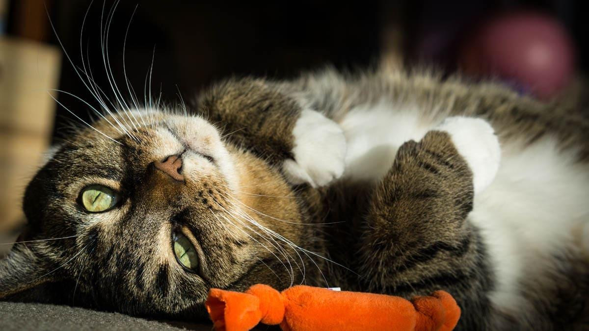Zantac for cats
