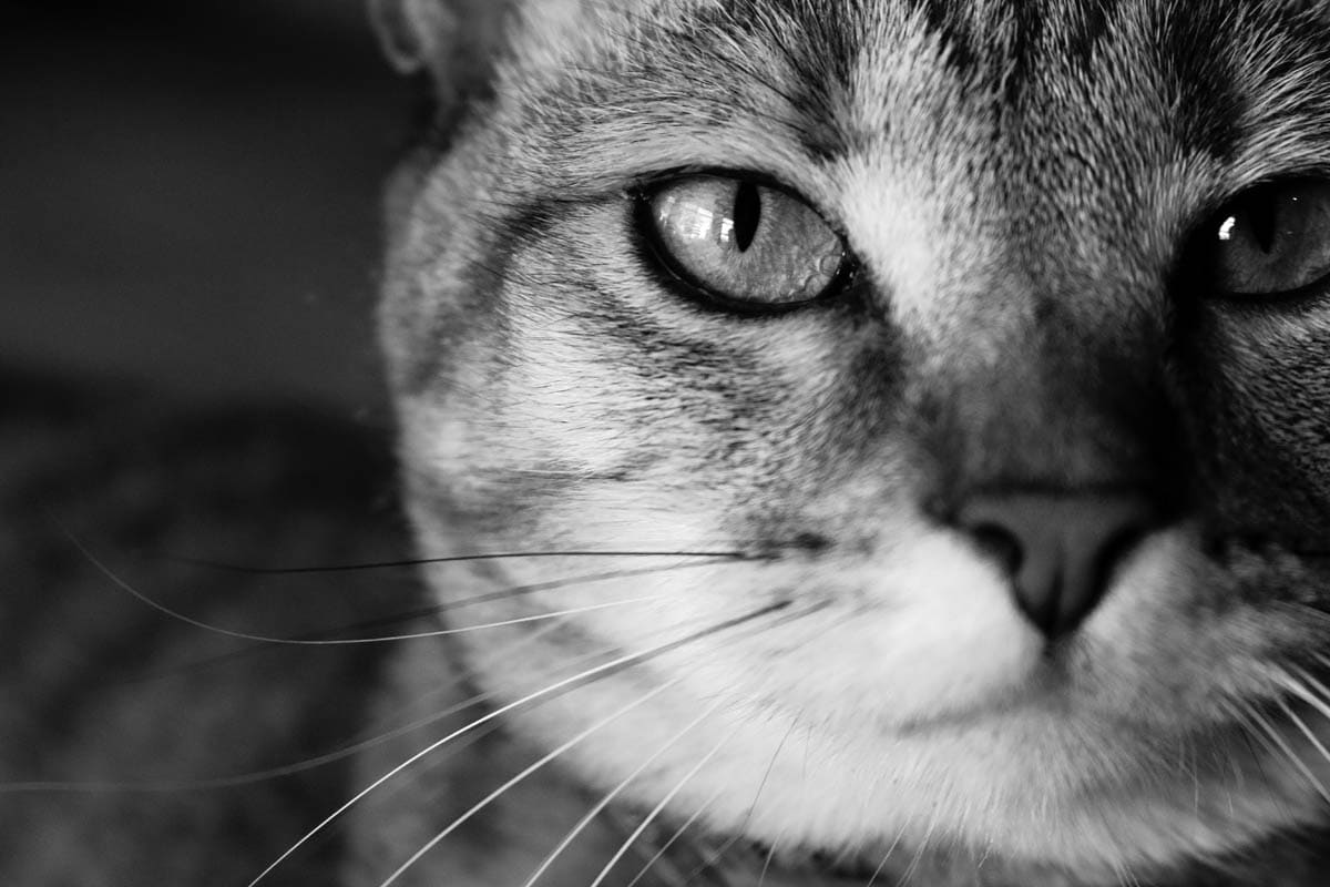 Common litterbox mistakes
