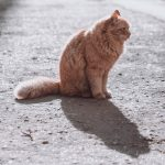 What To Do If You Find A Dead Cat On The Road?