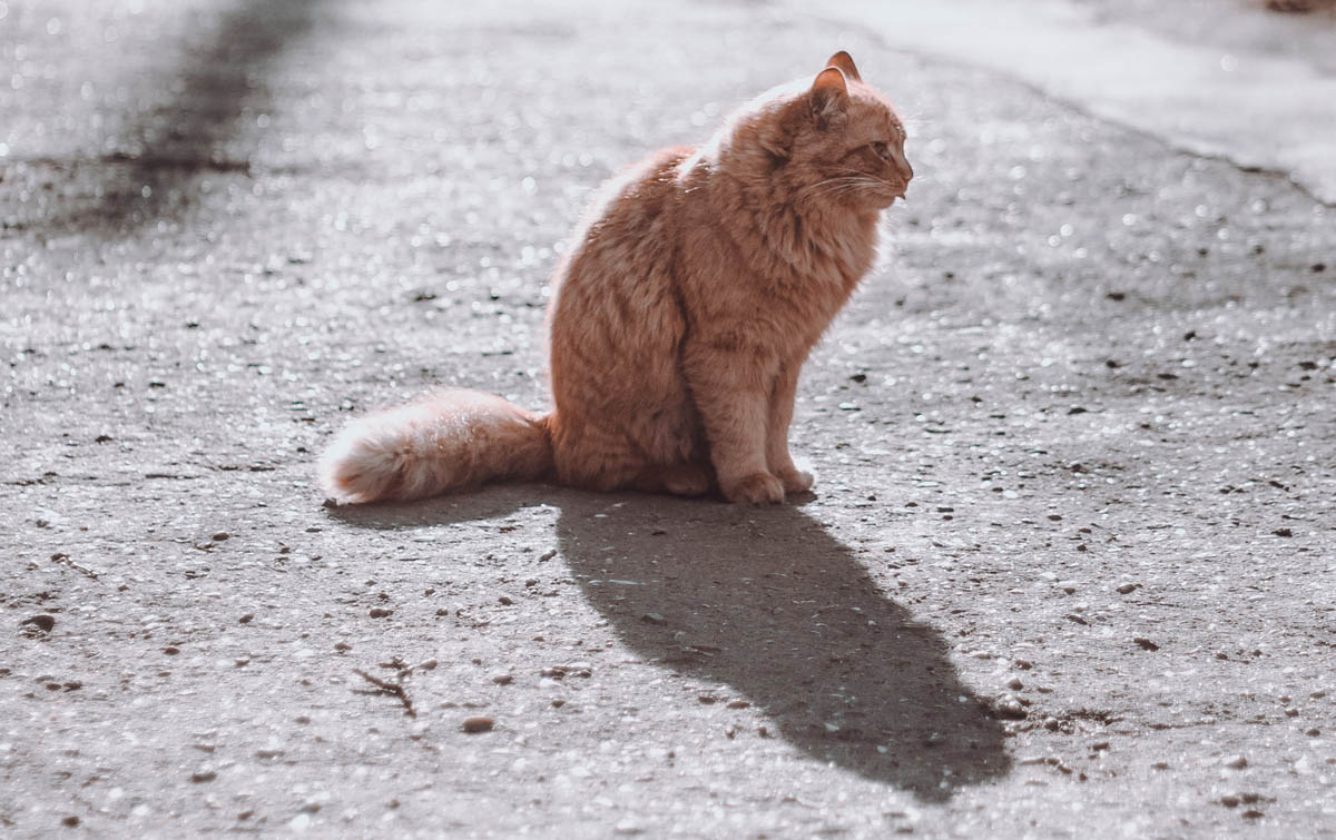 What should you do if you find a dead cat on the road?