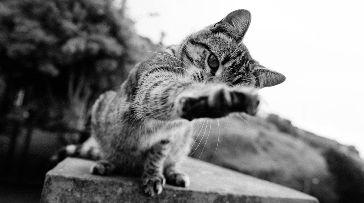 Why do cats knock things over?