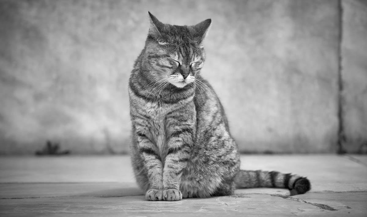 Adopt a less adoptable pet week