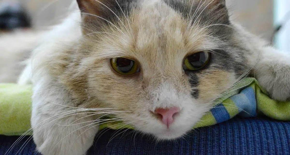 Cimetidine for cats