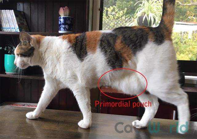 Primordial pouch
