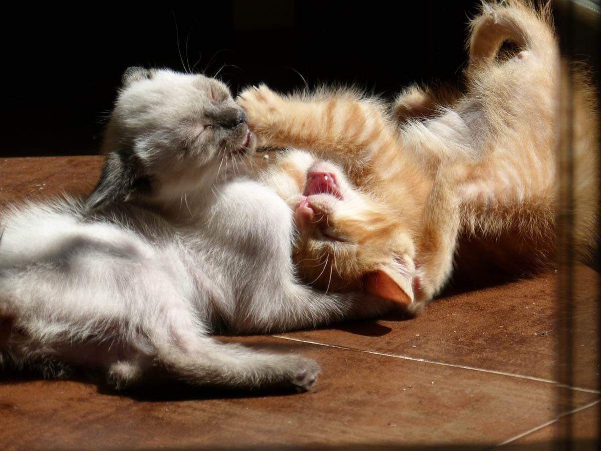 Non-recognition aggression in cats