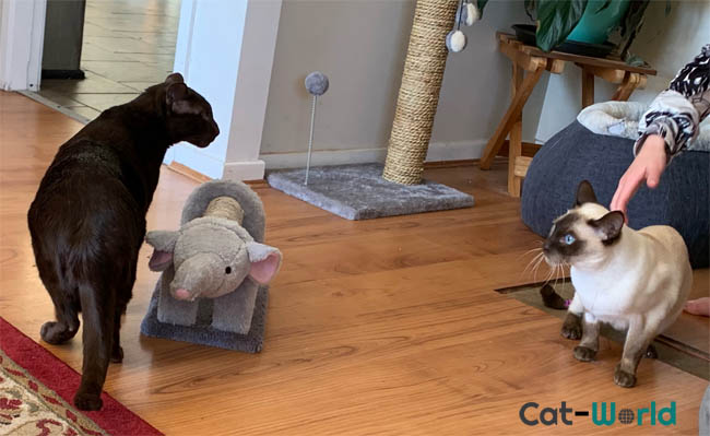 non recognition aggression in cats