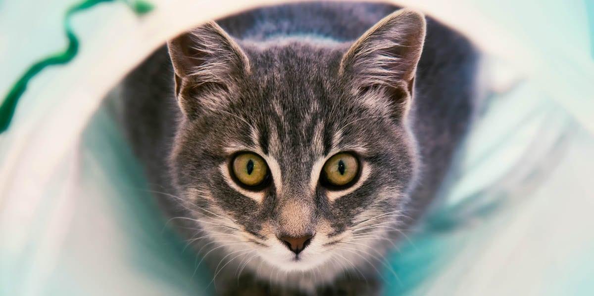 Claratin for cats