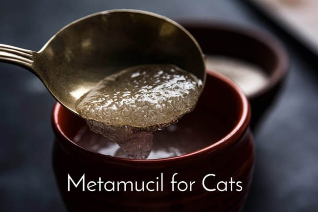 Metamucil for cats