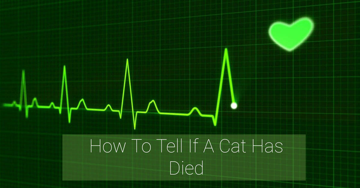 How to determine if a cat has passed away