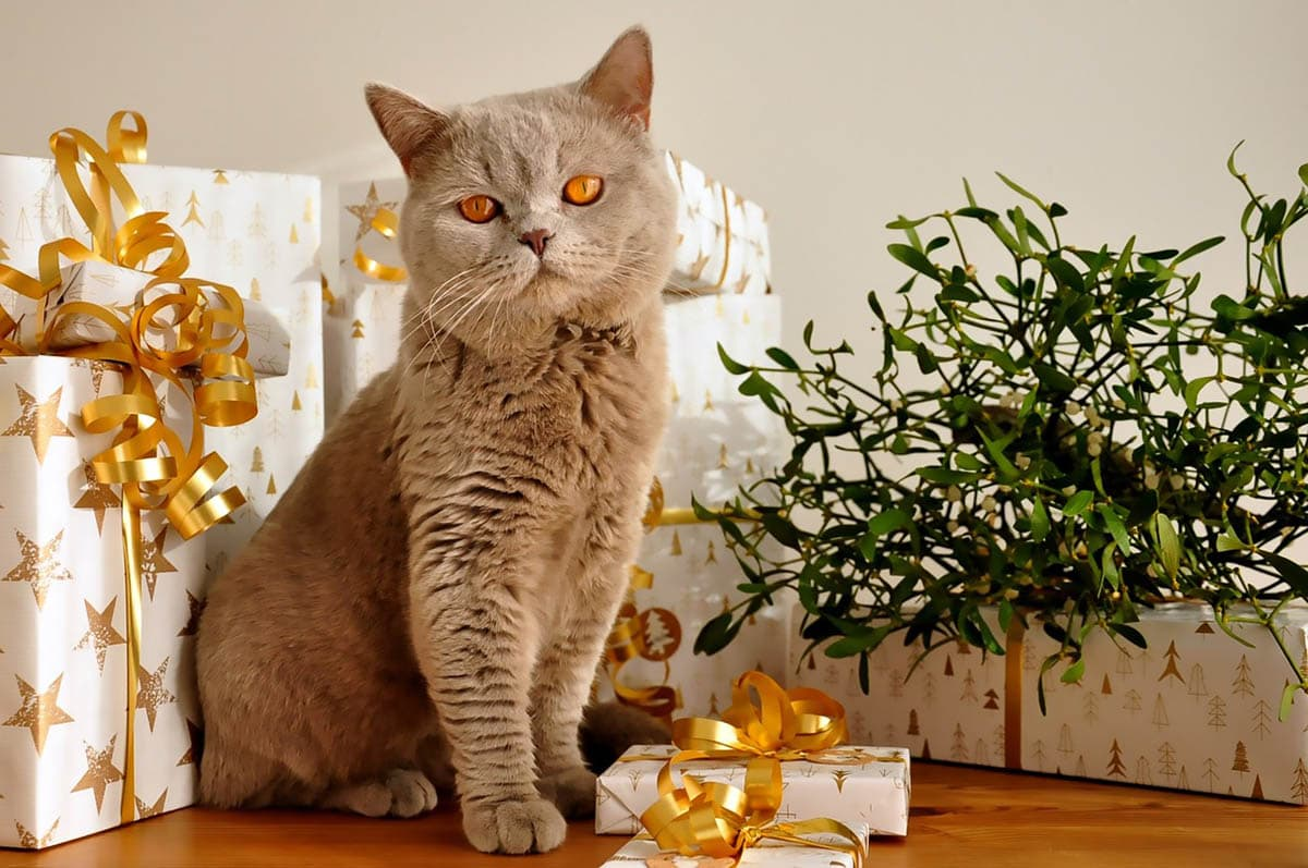 Keeping cats safe at Christmas