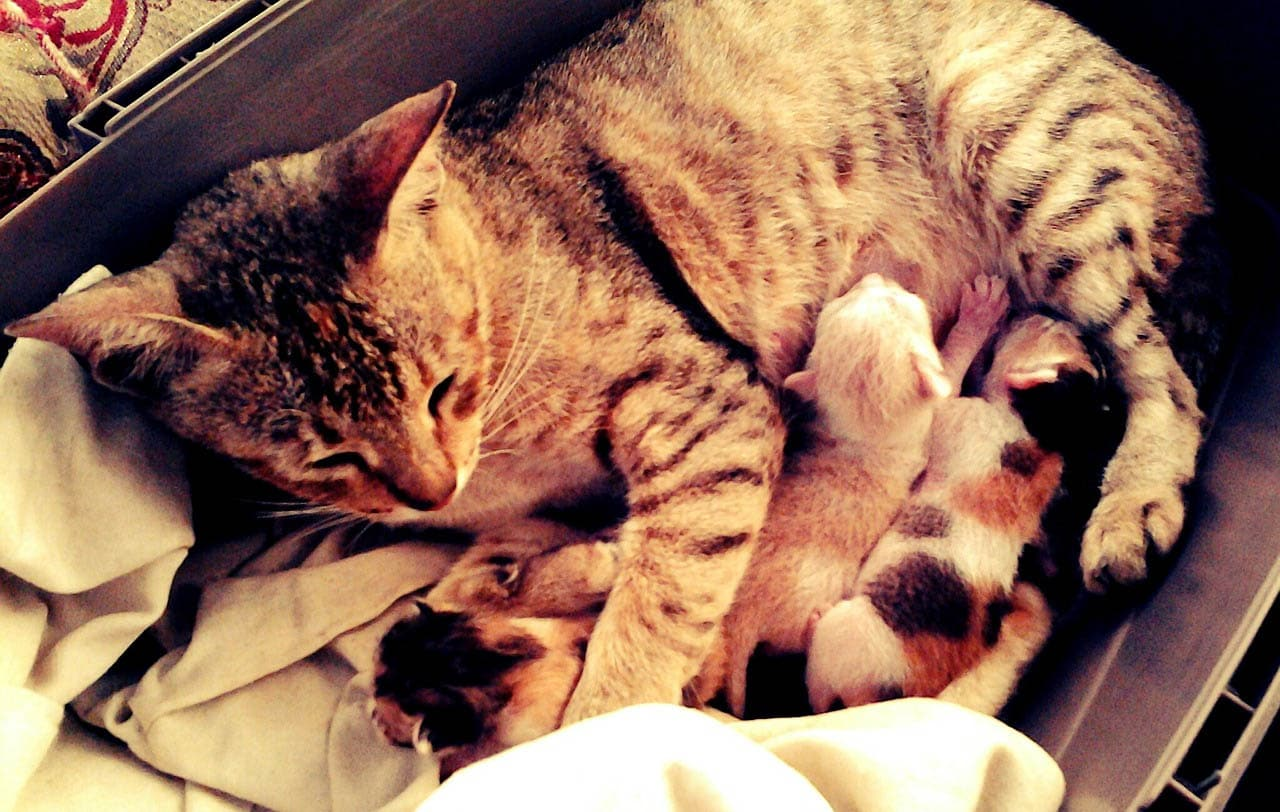 What to do after a cat has given birth