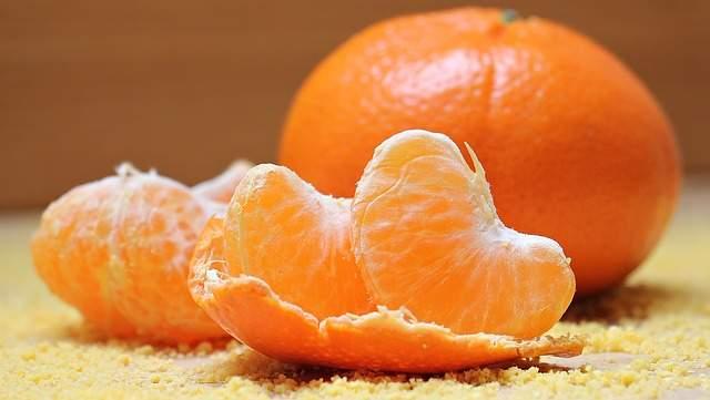 Can cats eat citrus?