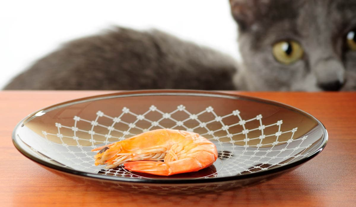 Can cats eat shrimp and prawns?