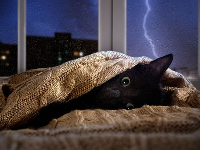 How to help cats scared of storms and fireworks