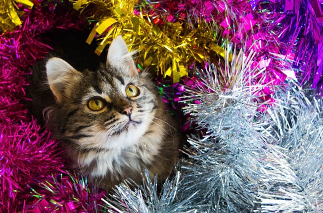 Cats and Christmas tinsel