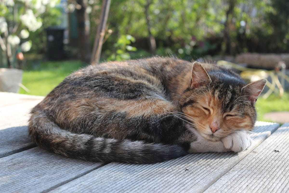Cat sleeping curled up