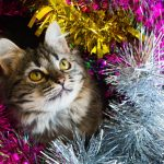 Cats and Christmas Tinsel - Know the Dangers
