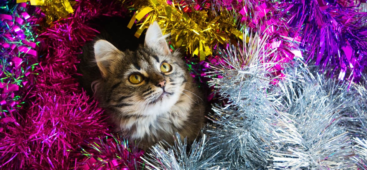 Cats and Christmas tinsel, know the risks