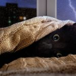 How To Help Cats Scared of Thunder and Fireworks