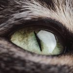 Most Read Cat Articles in 2018