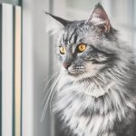 When Is The Right Time To Adopt A New Cat After Losing One?