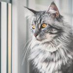 Adopting A Cat After Losing A Pet
