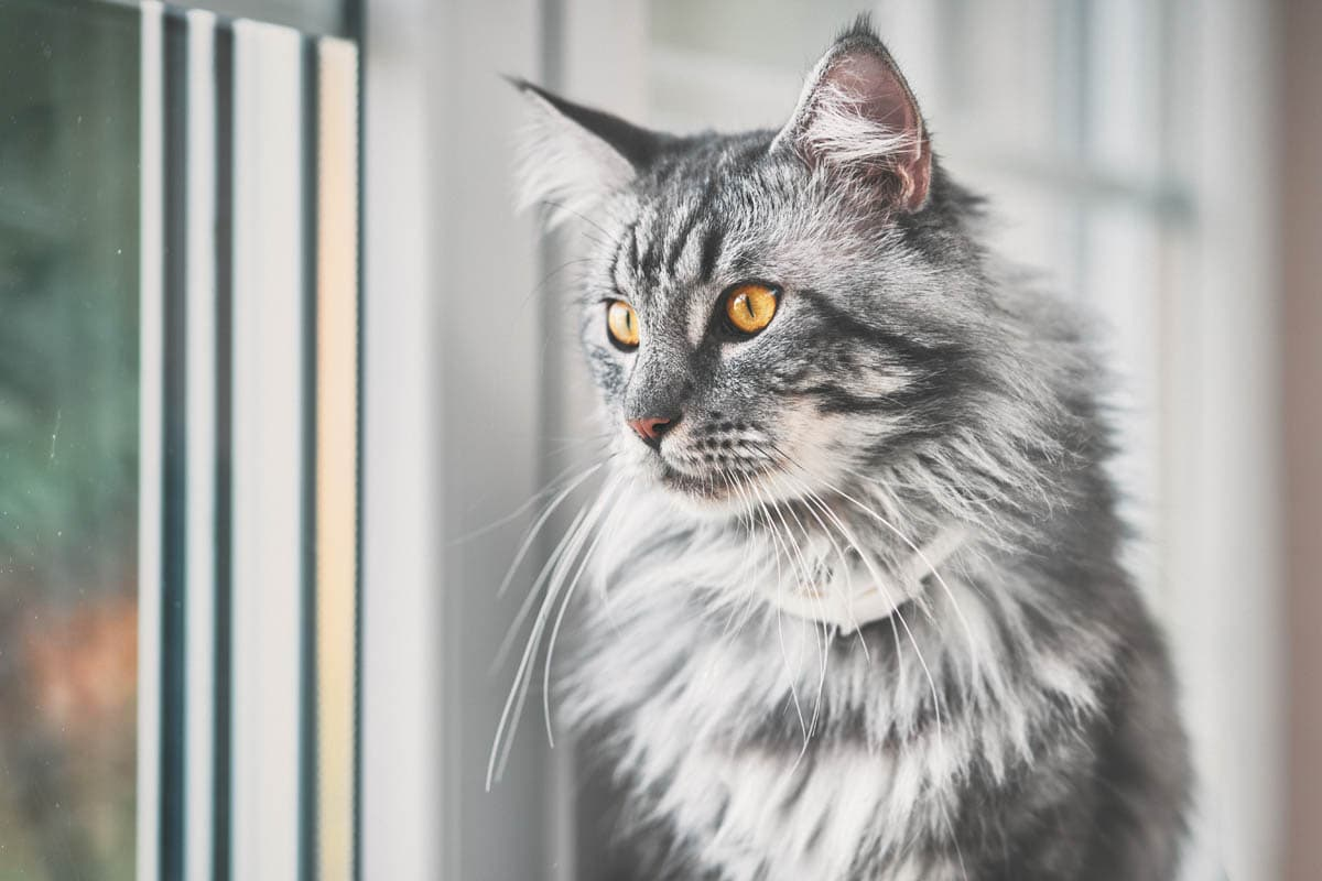 When is the right time to adopt after losing a pet?