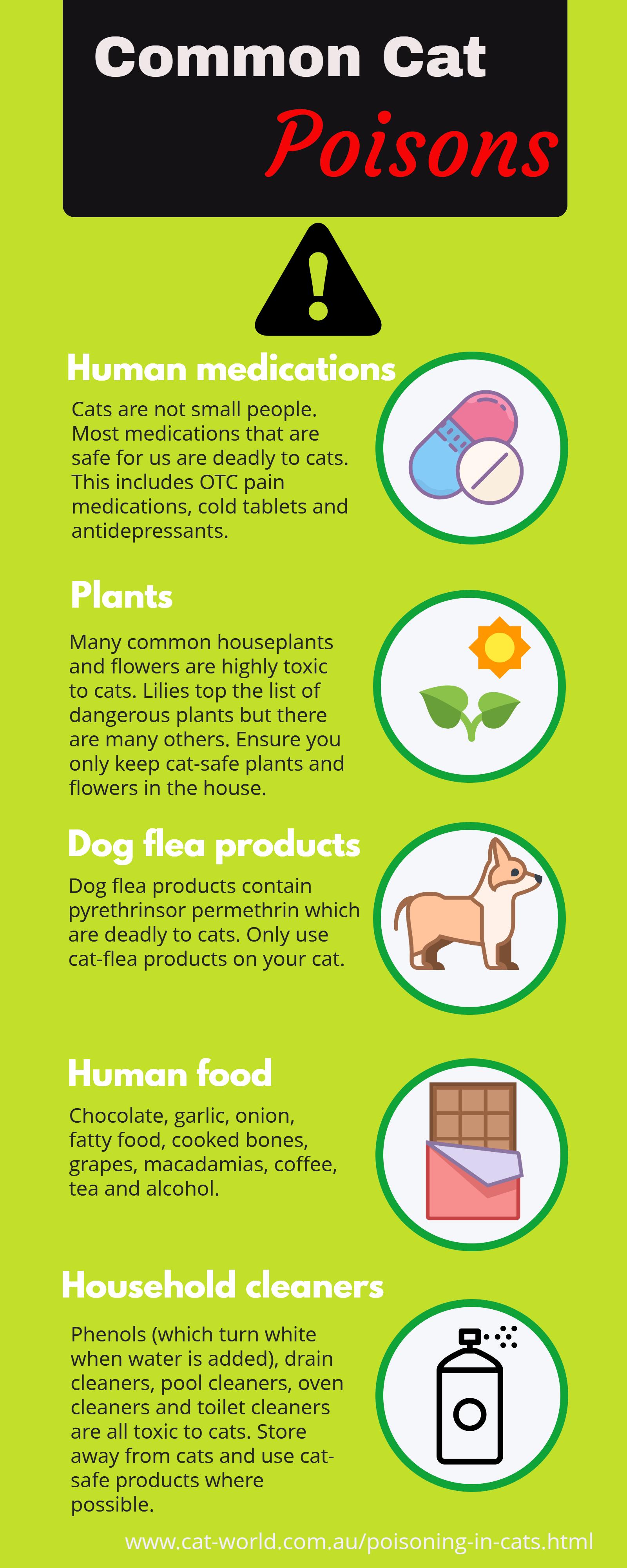 Common cat poisons