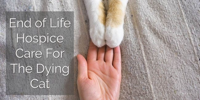 End of Life (Hospice) Care For The Dying Cat