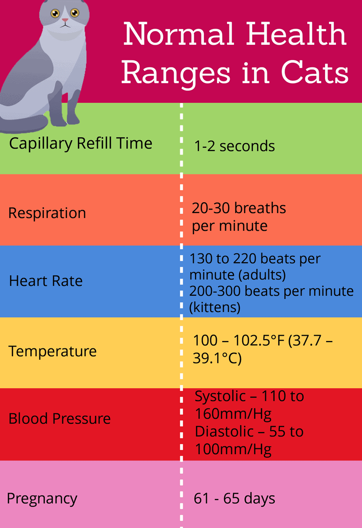 Normal health ranges in cats
