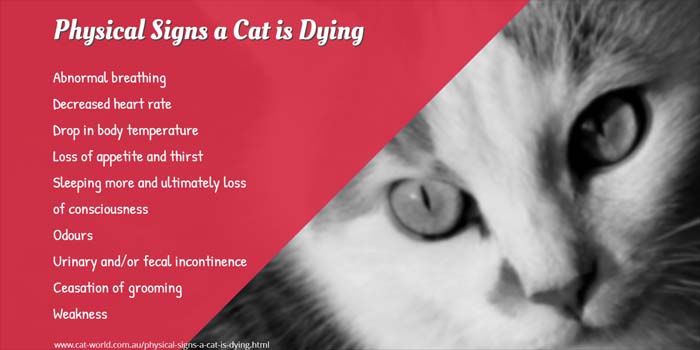 Physical signs a cat is dying
