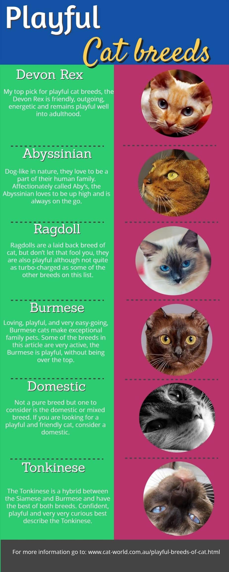 Playful cat breeds