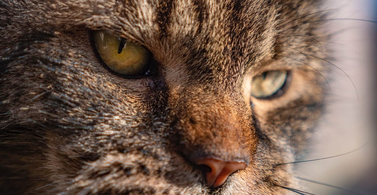 Age-related symptoms in senior cats