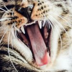 8 Common Dental Problems in Cats