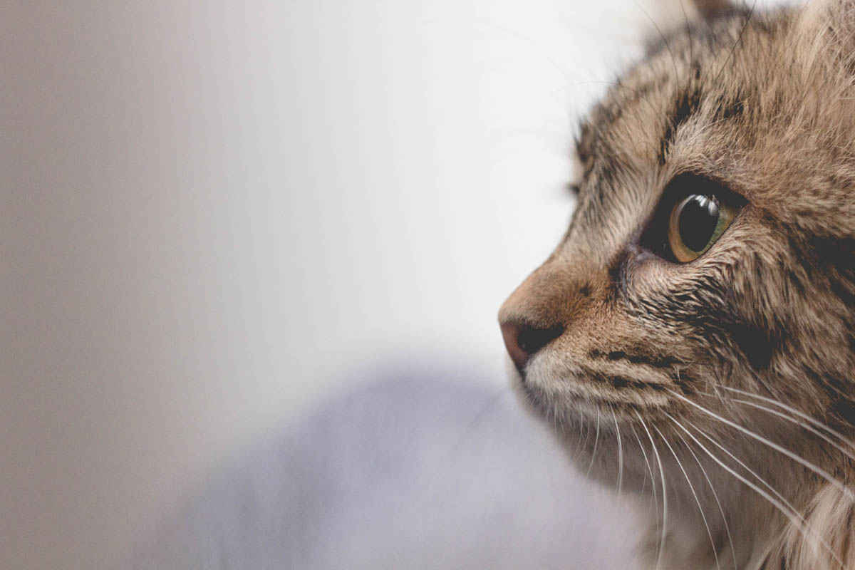 Emergency treatment for toxin exposure in cats