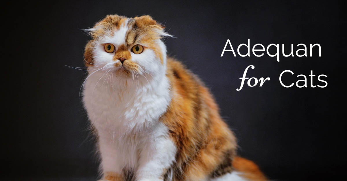 Adequan for cats