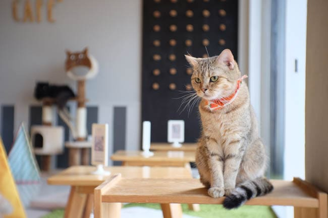Cat cafes around the world