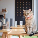 Global Cat Cafe Directory - Cat Cafes Around The World