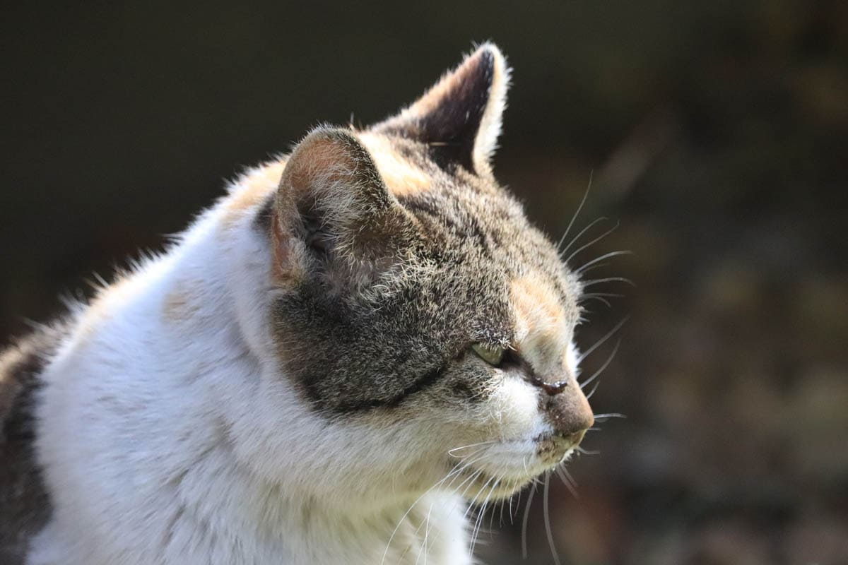 Health checks for senior cats