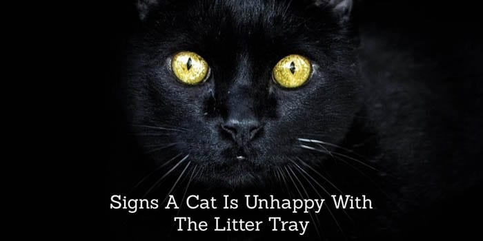 Signs a cat is unhappy with the litter box