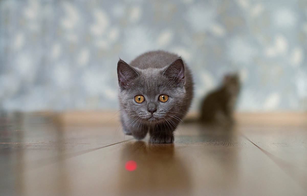 Are laser pointers safe for cats?