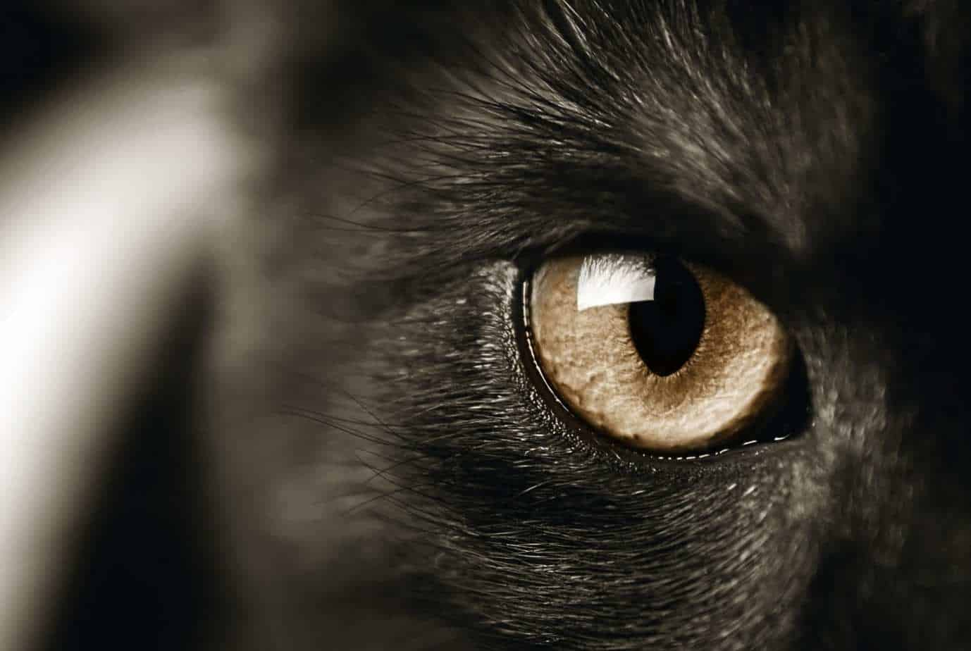 Obsessive compulsive disorder in cats