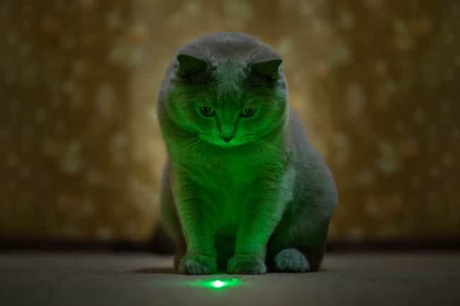 Cats and lasers