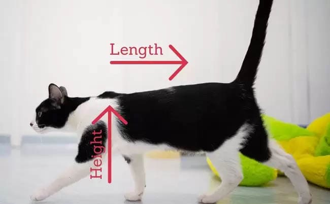 Cat height and length