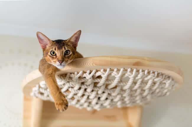 Cat relaxing in a hammock