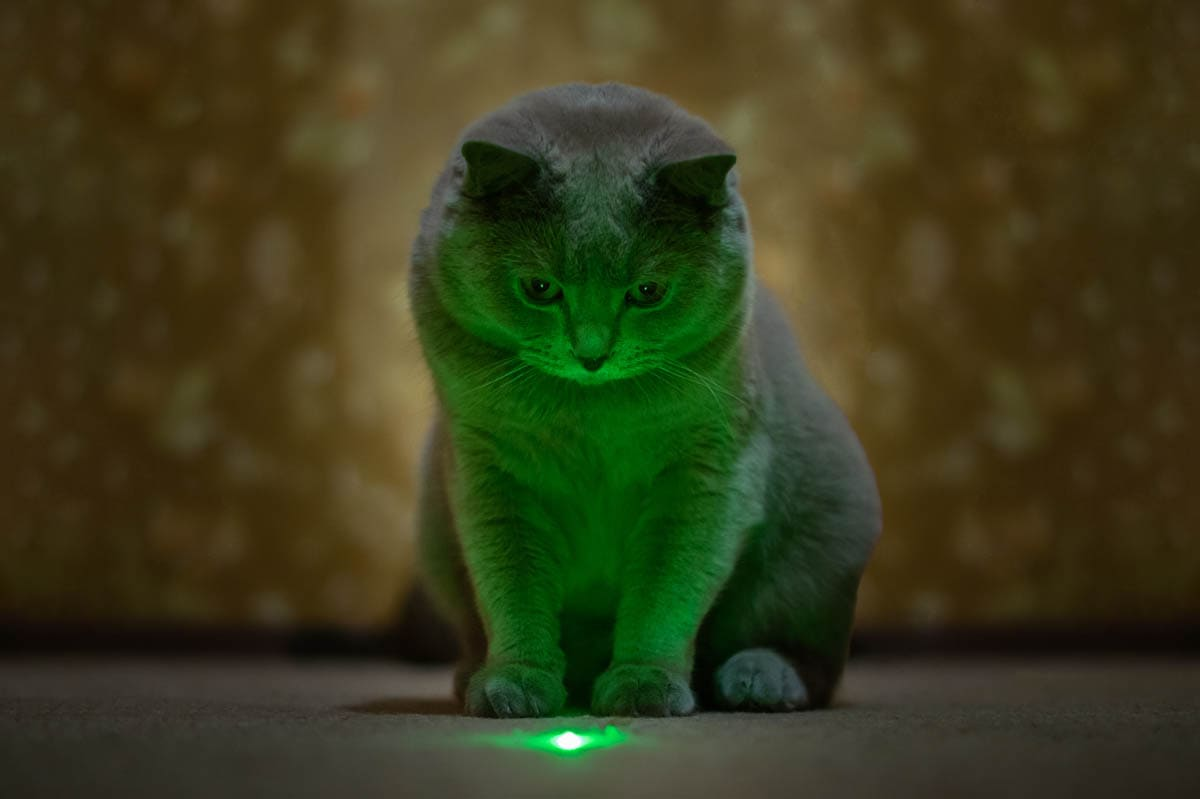 Cat playing with a laser pointer