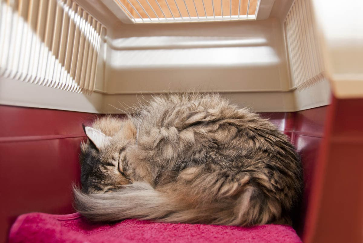 Cat sleeping in a carrier