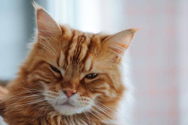 Cat slow blinking