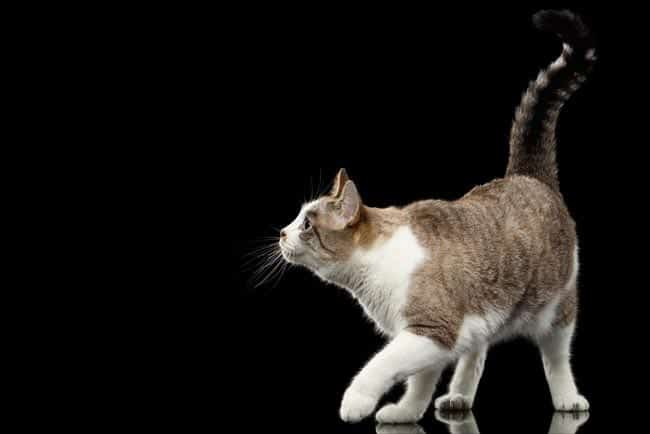 Happy cat with upright tail